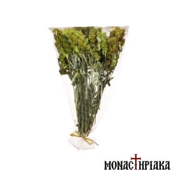 Mountain Tea (Sideritis)