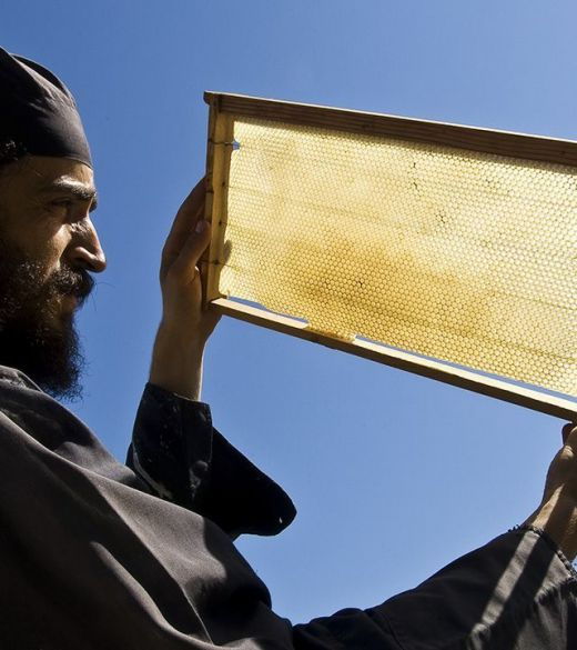 MOUNT ATHOS HONEY - POLLEN